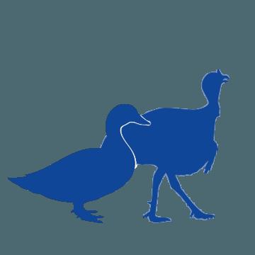 pavos patos engorde