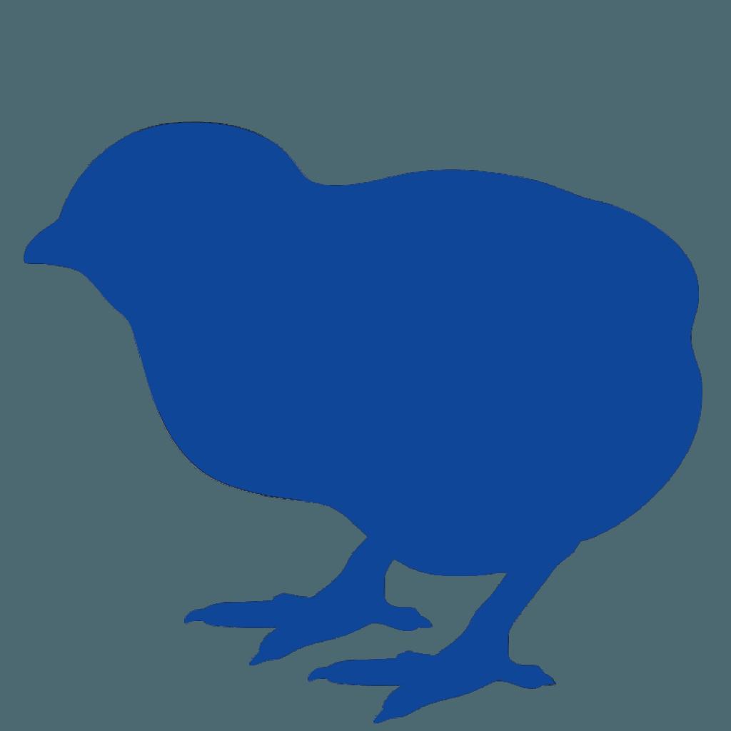 pollos de engorde